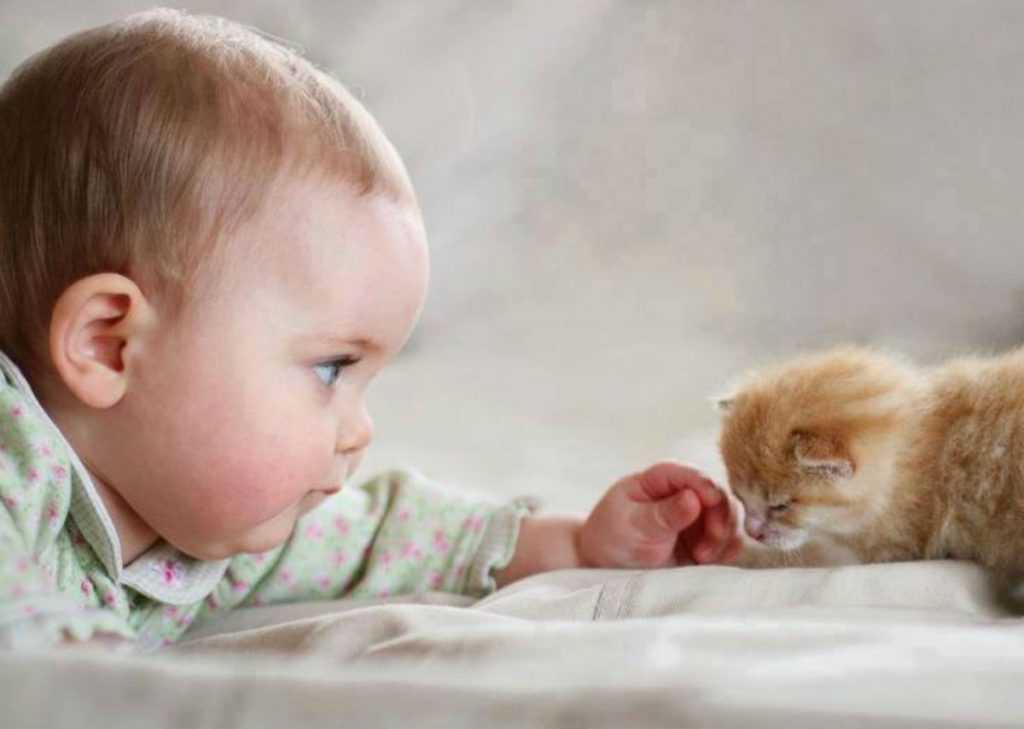 мода картинки кошки и малыши медицинских